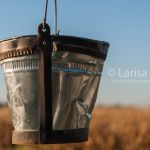 Old metal rusty bucket  (part of traditional shadoof or well pole, or well sweep) closeup with blue sky and dry corn field as a background.