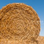 Straw rolls on the farm field